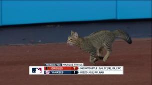Orioles 7 - Yankees 1