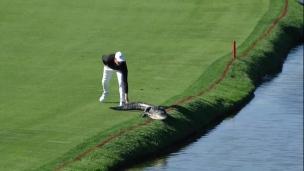 Le golf, un sport dangeureux!