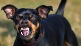 Un chien agressif