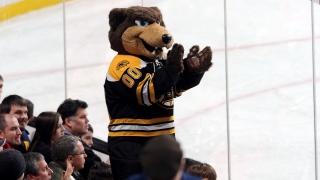 Mascotte des Bruins