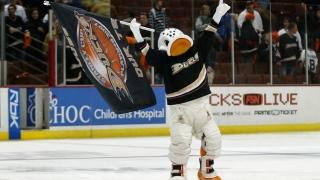 Wild Wing, mascotte des Ducks d'Anaheim