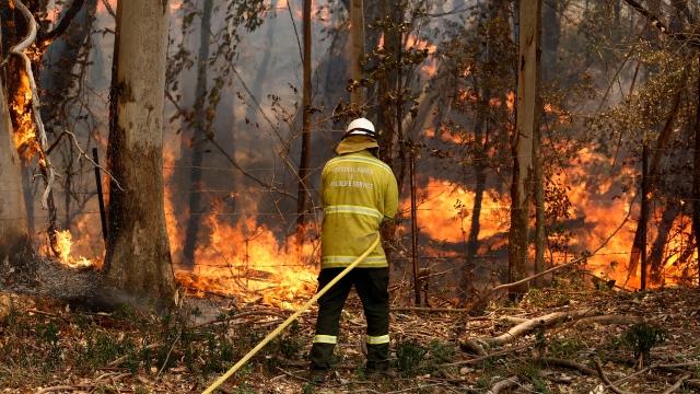 Incendies : le Rallye d'Australie est annulé