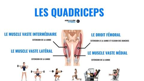 Comprendre et développer ses quadriceps